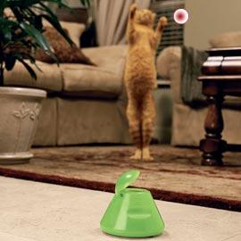 Cat Laser Beam