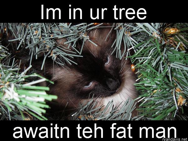 Merry Cat