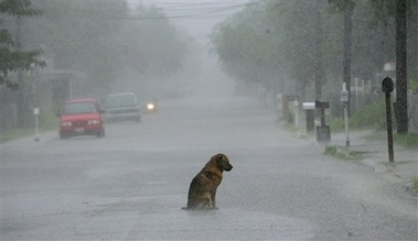 Dog in the storm